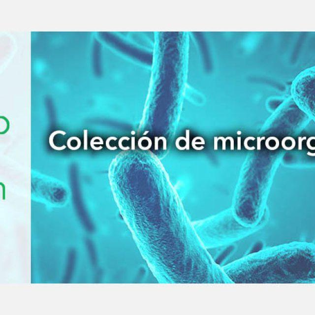 """MicroBioSpain: la colección de microorganismos españoles accesible """"on-line"""""""
