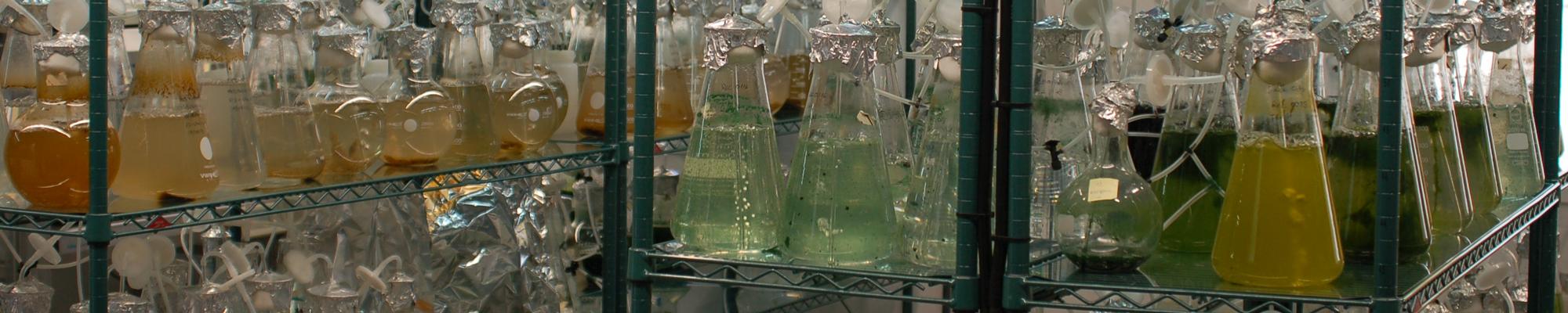 Banco de Algas - MicroBioSpain